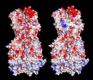 H1N1 MOLECULAR MIMIC