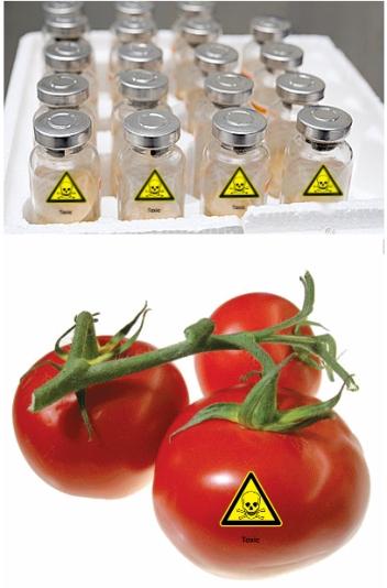 tomatoesvaccines