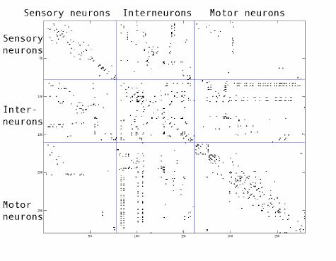 Adjacency-matrix-of-the-Celegans-network-The-adjacency-matrix-of-the-Celegans-neuronal